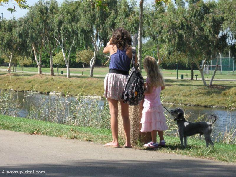 ילדות וכלב ליד הירקון