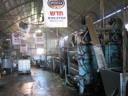 מפעל שמן זית גדול ומודרני, צילום: דני בר