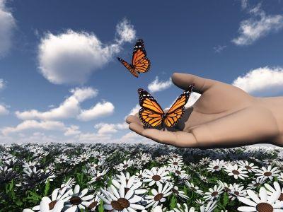 פרפרים הם חופשיים