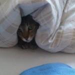 cat1 (צילמה: תמי זילברג)