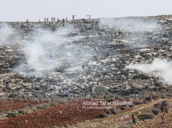 העימותים בחלקות ליד אש קודש (צילום: טלעאת אל חסן)