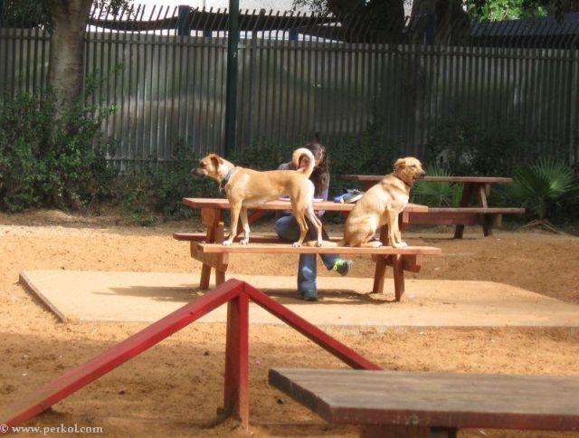 כלבים (צילמה: שרית פרקול)