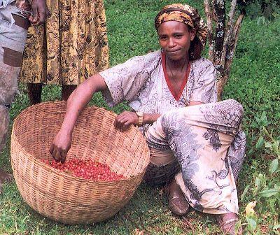 חקלאית קפה בערבות אתיופיה (מקור: ויקימדיה)