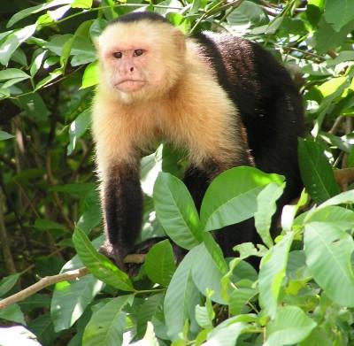 אישה בריטית טוענת: גדלתי כילדה בחברת קופים בג'ונגל