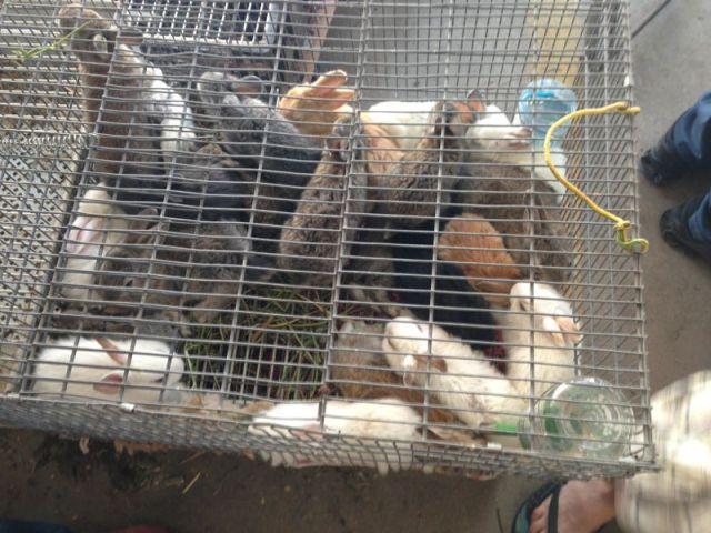 ארנבים דחוסים אחד על השני בתוך כלובים קטנים עם מים מעופשים וללא מזון - השוק בכפר קאסם. (צילום: תנו לחיות לחיות)