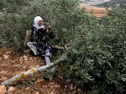 עימותים בגדה: מתנחלים תקפו פלסטיני, הפלסטינים הגיבו באבנים