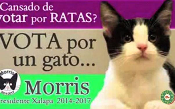 כרזת הבחירות של מוריס