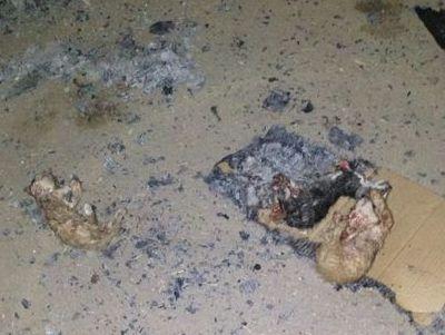נערים שרפו למוות חתולים בגלל שעמום