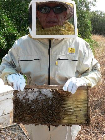 כוורת לא חוזרת: ייצור הדבש קטן ואוזל מהמדפים
