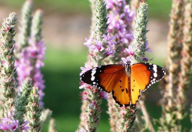 מאירועי ראש השנה: מפרפרים עד ינשופים