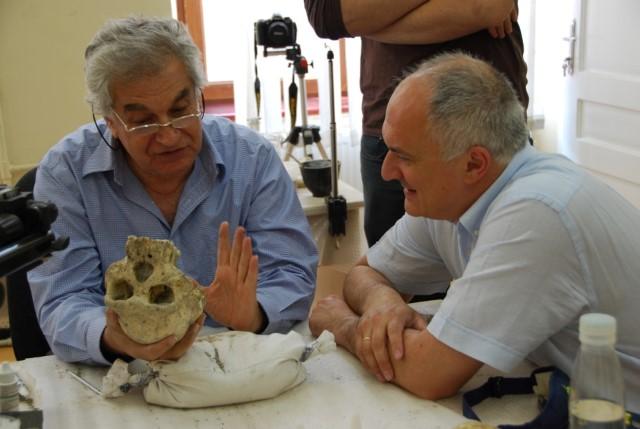 פרופסור דוד לורדקפאניזה (ימין) ופרופסור יואל רק (שמאל) בוחנים את הגולגולת שנמצאה בגיאורגיה (צילום: אבישג גינזבורג)