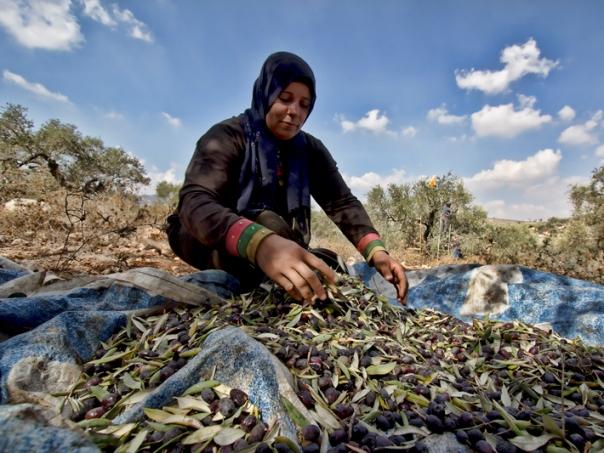 הגדה המערבית – אפוקליפסה עכשיו