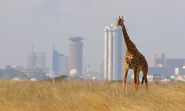 אפריקה תת-סהרה: יבשת ההזדמנויות הבלתי מוגבלות