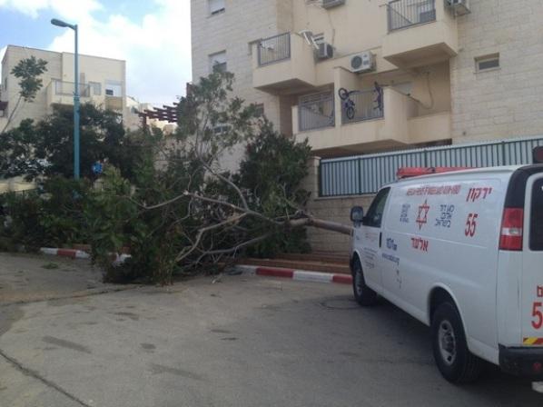 """עץ שנפל על מכונית בסערה (צילום: רענן שי, ארכיון מד""""א)"""