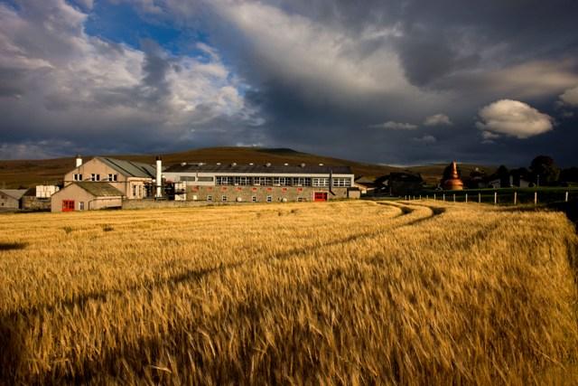שדות השעורה של מזקקת גלנפארקלס בסקוטלנד