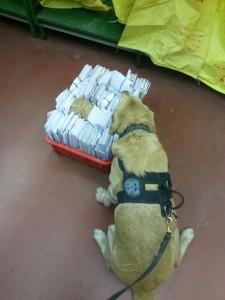 """כלב מגלה סמים. צילום: יס""""מ נתב""""ג"""