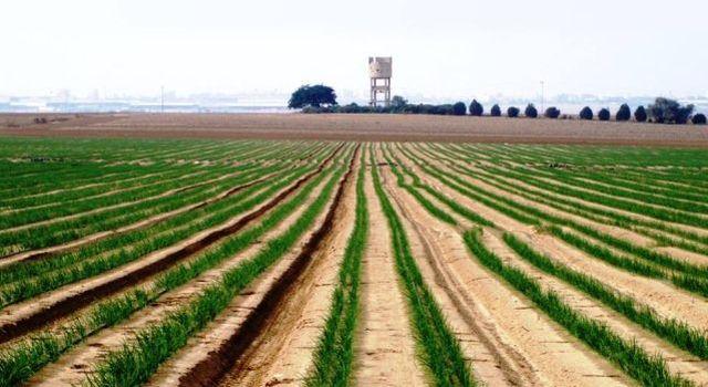 מגדל המים ההיסטורי של בארות יצחק בנגב, שעבר שיקום וחיזוק. (צילום: רפי בביאן)