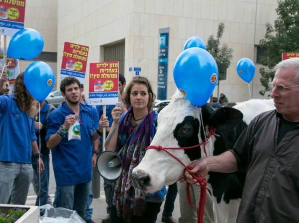 מפגינים נגד מכירת תנובה לסינים: העם דורש חלב ישראלי