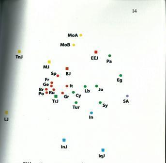 מפת הDNA מוכיחה: מקור הפלסטינים ביהדות אשכנז (צילום באדיבות צבי מסיני)