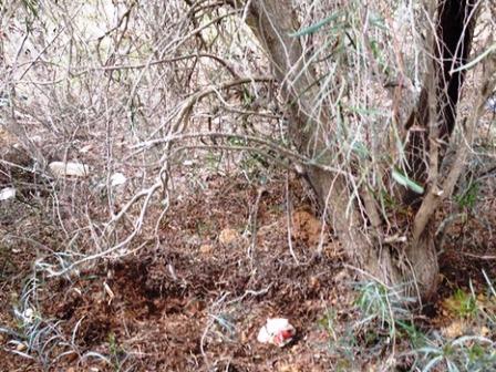 מקום מציאת גופת התינוק (צילום משטרת ישראל)