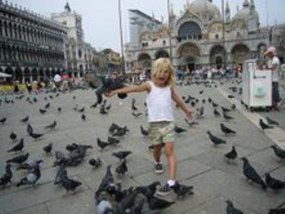 יונים בכיכר סן מרקו בונציה ( צילום: Daniel Ventura , ויקימדיה)