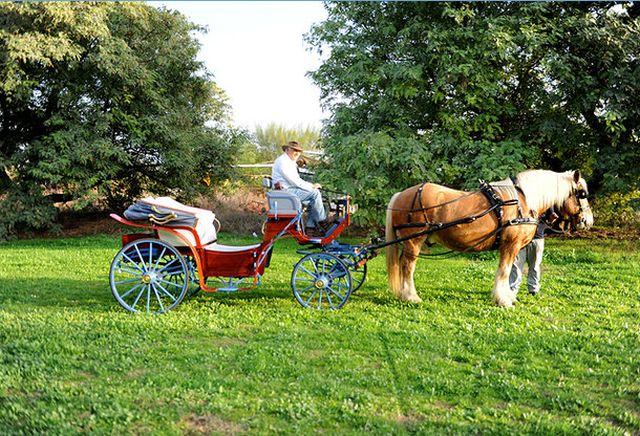 טיולי כרכרות וסוסים באשדות ברקאי בעמק הירדן. (צילום מתוך אתר האינטרנט)