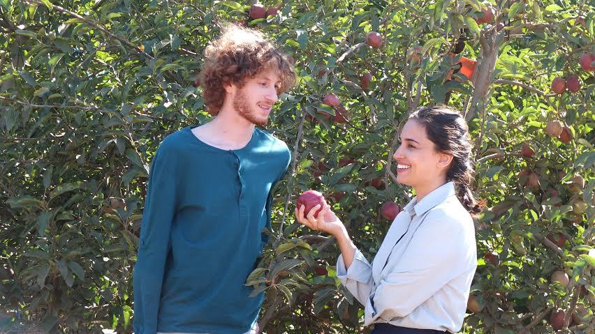 תפוחי הקונפליקט