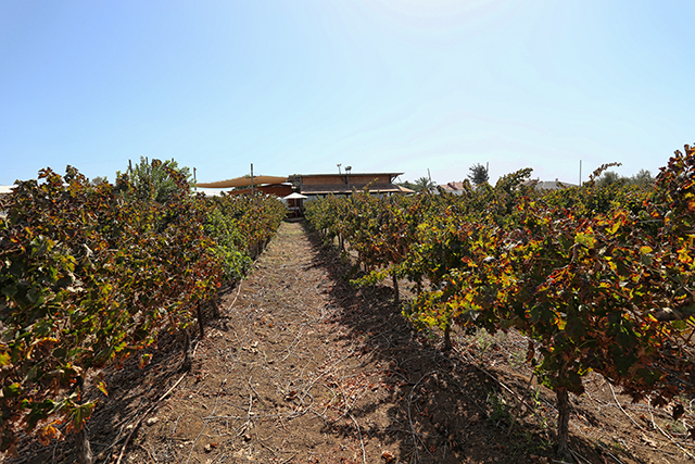 פסטיבל היין ה-19 במטה יהודה