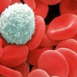 תאי דם לבנים