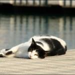 חתול בשמש