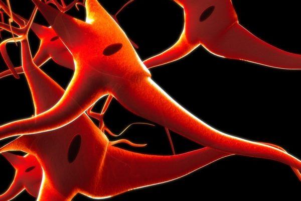 """באוניברסיטת ת""""א מקווים: נמצא החומר שיגן על המוח ממחלות ניווניות"""