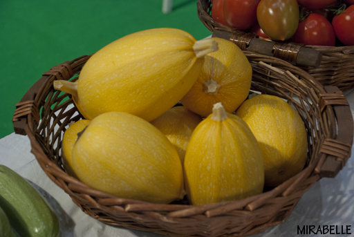 דלעת ספגטי. פיתוח של אוריג'ין זרעים, גבעת ברנר. תערוכת אגרומשוב 2012
