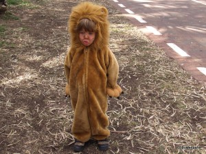 רוצה להיות אריה (צילום: ציפי מנשה)