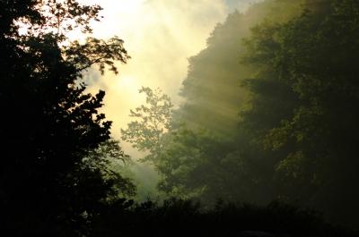 יער גשם Sarah Arbogast / FreeDigitalPhotos.net