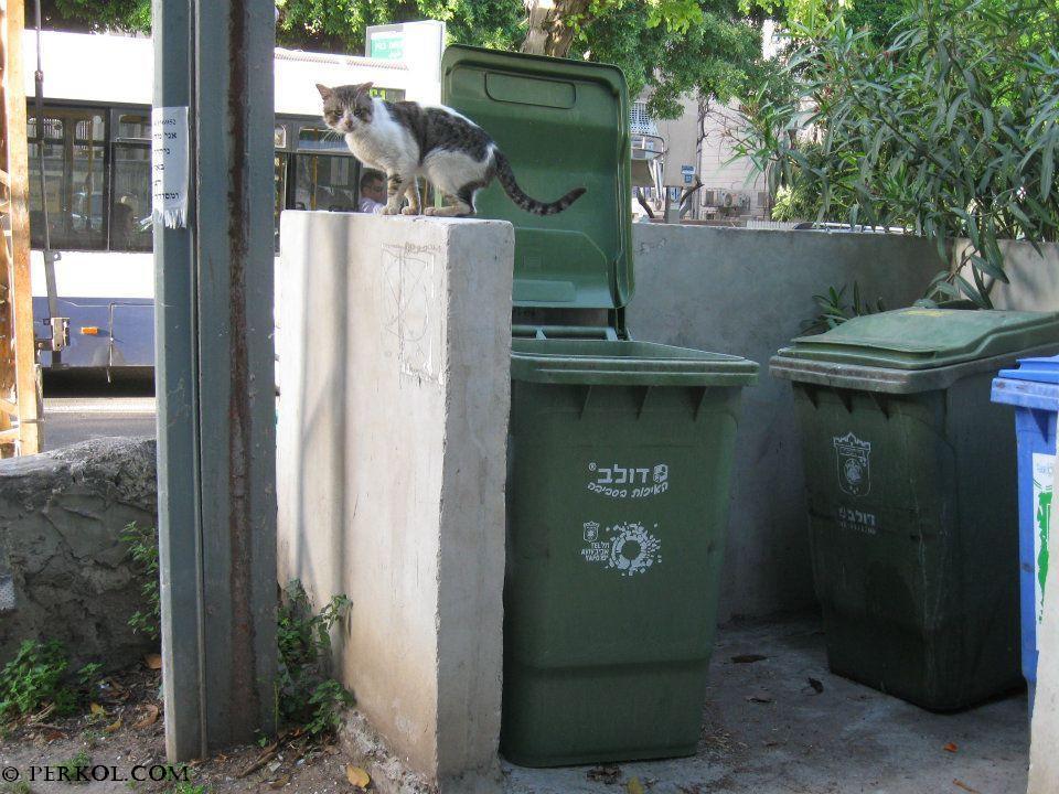 חתול רחוב (צילמה: שרית פרקול)