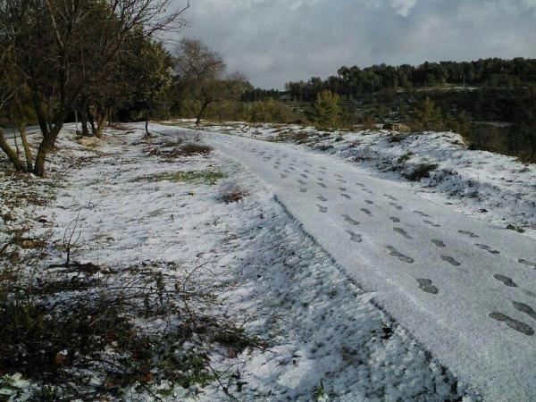שלג בגולן (צילום: משטרת ישראל)