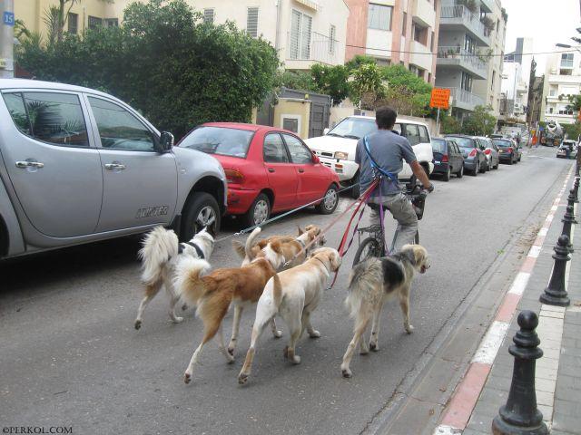 שמרטף כלבים (צילמה: שרית פרקול)