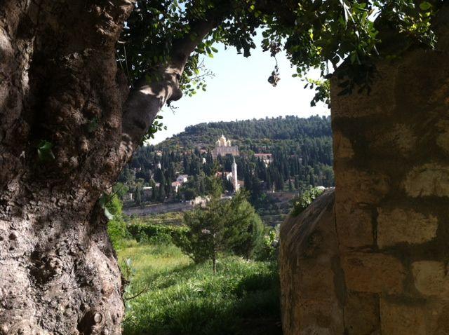עין כרם. שילוב כרמי גפנים וזיתים, המזכיר כפרים באיי יוון או בחבל פרובנס שבצרפת. (צילום: פנינה עין מור)
