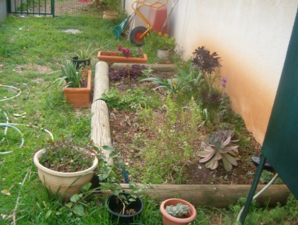 תרופות שמגדלים בגינה
