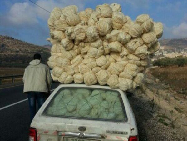 נקנס על מטען חורג של לופות