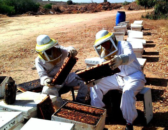הדבוראי משה לניאדו ועוזרו בודקים את כוורות הדבש בימי הלחימה של צוק איתן. צילום: אלון סיגרון