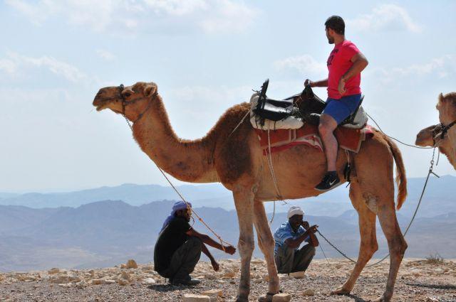 """מסע גמלים במדבר ב""""דרך האוהלים"""". ללמוד על תרבות הבדואים. (צילום: אפי פרי)"""
