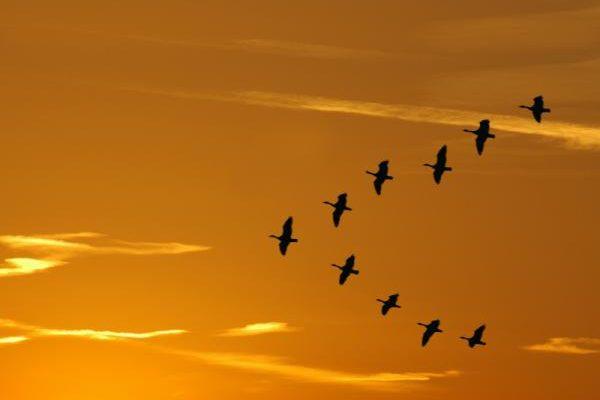 """עדיף ציפור אחת בשמים או שתיים בקן? והקשר ללימודי דולה ב """"נשמיאיה""""."""