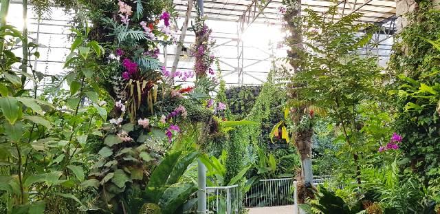 צמחים באקלים טרופי בחממה (צילום: צביה אדלר)