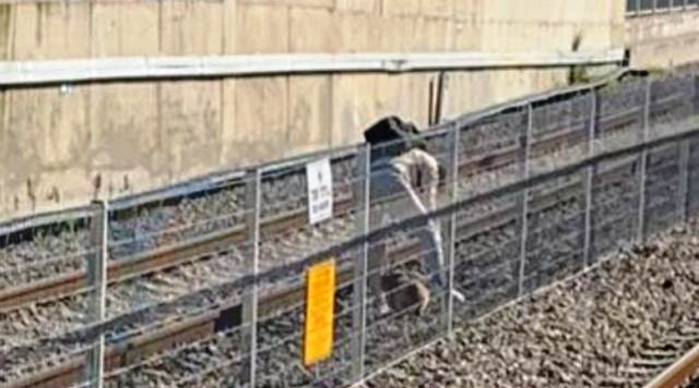 רצה אחרי כלבה על גבי המסילה ותנועת הרכבות נעצרה
