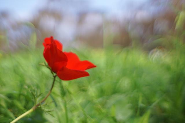פסטיבל דרום אדום בתאריכים 30 ינואר עד 29 בפברואר (צילום:דן בר-דוב)