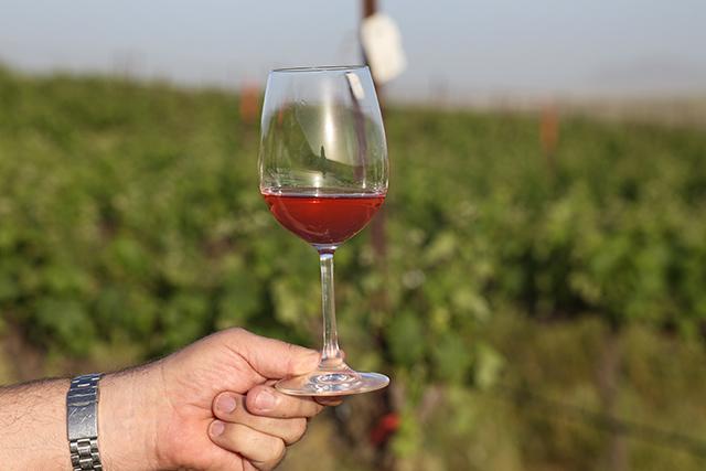 יינות חדשים לשולחן החג