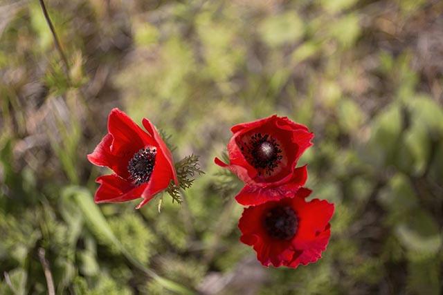 דרום אדום (צילום:דן בר דוב)