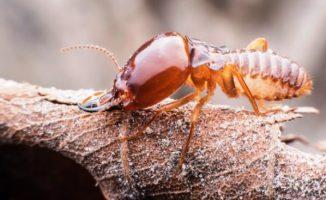 super-macro-termite-walking-dried-leaf_36036-728