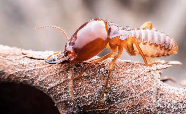 super-macro-termite-walking-dried-leaf_36036-728